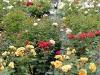 Blütenpracht im Juni - Juli soweit das Auge reicht