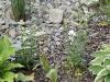 Stein und Mulch kombiniert
